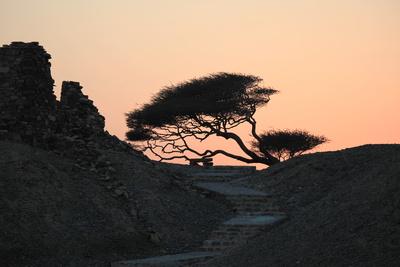 Sonnenuntergang mit Akazie