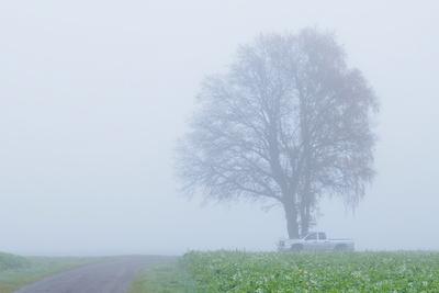 im nebel unterwegs 2