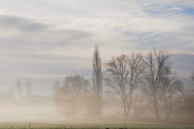 nebel in den wiesen 5