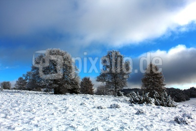 Wintereinzug
