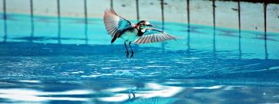 Ein Vogelbad