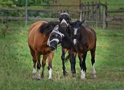 Vermummte Pferde