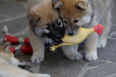 Zwei süße Fellnasen