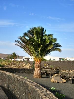 Palme am Wegesrand