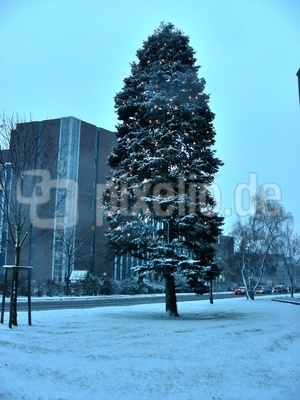 Weihnachtsbaum in Erlangen