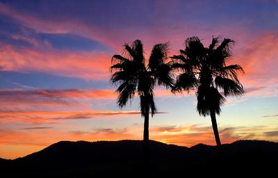 Sundown mit zwei Palmen