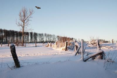 SchneeFlug im Winter