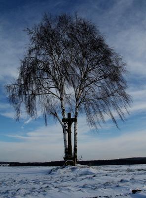 Birke mit Sühnekreuz