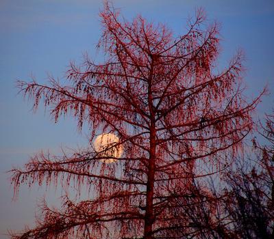 Silvester-Mond