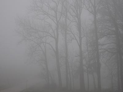 Stille Baumkronen im Nebel