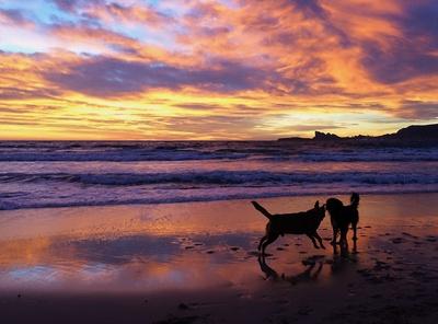 Hunde bei Sonnenuntergang