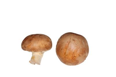 Pilze 21