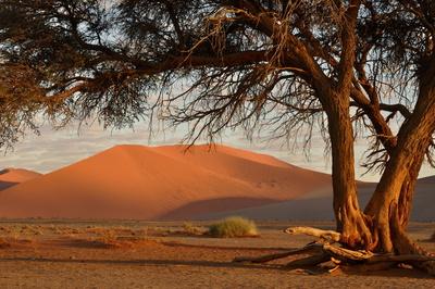 Im Tal der Dünen