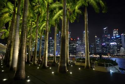 Palmen in Singapore Downtown