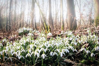 Frühling im Nebelwald
