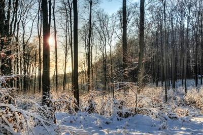Schnee im Eggegebirge