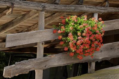 Blumenschmuck, gesehen an einer Stadelauffahrt