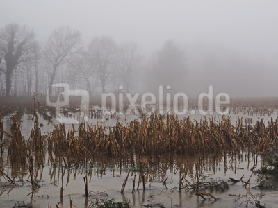 land unter im nebel 2