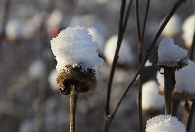 Schneekappe01