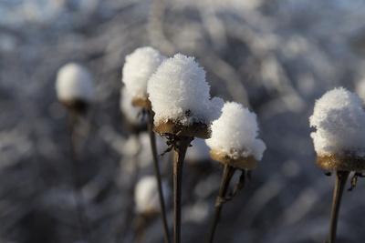 Schneekappe02