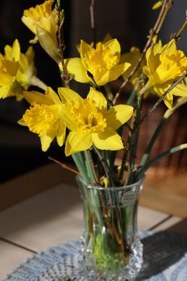 Narzissen in der Vase