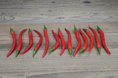 Paprika, Chili, Peperoni – fein säuberlich aufgereiht