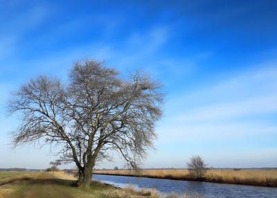 Hamme-Winter