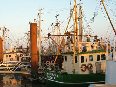 Norddeich Fischkutter im Hafen