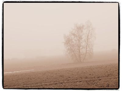 nebel in den feldern 4
