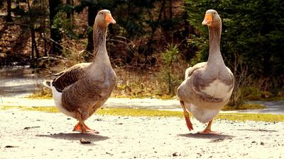 Spaziergang im Duett