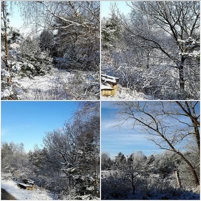 Schneebedeckt - Collage