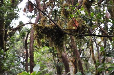 Im Anaga-Regenwald 1
