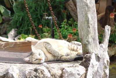 Entspanntes Päuschen in der Sonne