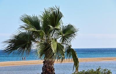 Urlaub am Meer - Eine Palme am Strand