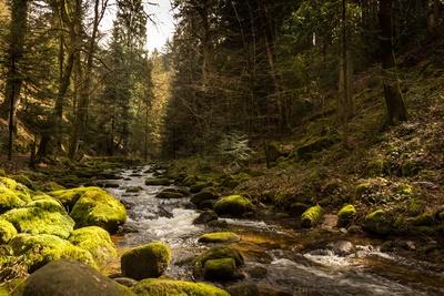 Im Tal .... wo der Wildbach rauscht