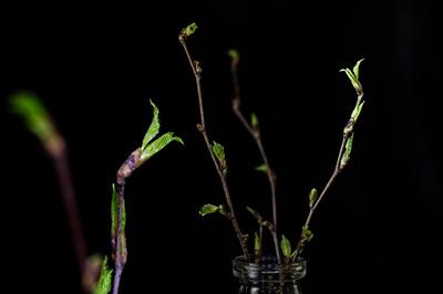 Frühling aus der Vase