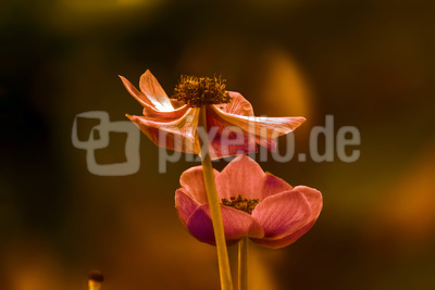 Blumengruß in Pastell