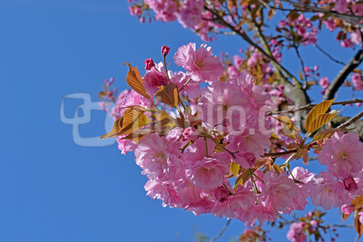 Die Schönheiten des Frühlings