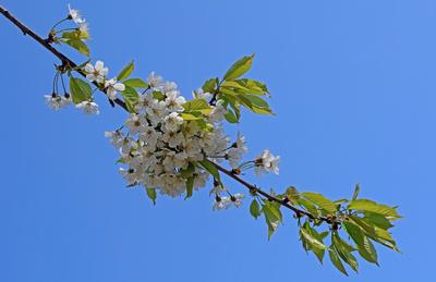 Die Schönheiten des Frühlings 02