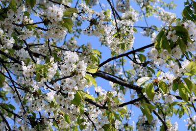 Die Schönheiten des Frühlings 03