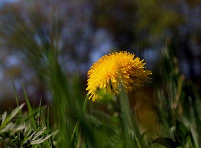 Frühlingsfreuden 03