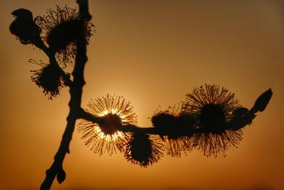Sonnenuntergang mal anders II