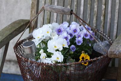 Alter Korb mit Blumen