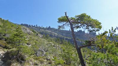 Bergsturzgebiet Goldau – Naturreservat