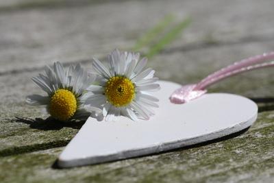 Ein Herz mit Gänseblümchen