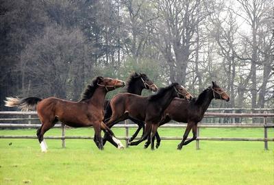 ausgelassene Pferde....