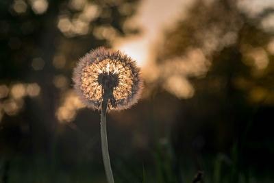 Mit Altglas mal Fotografiert