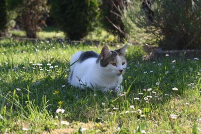 Romy liebt den Garten
