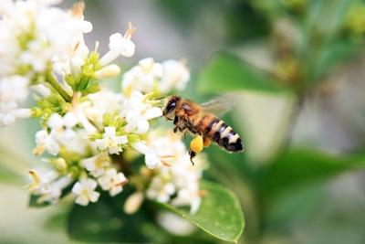 Fleissige Biene 1