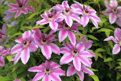 Blüten 460